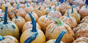 fall decor pumpkins decor ideas acorns candy corn decorating